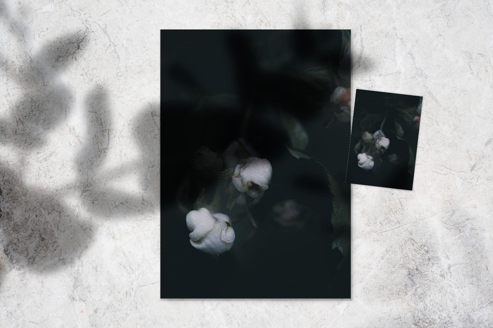 Juliste | Kaiho