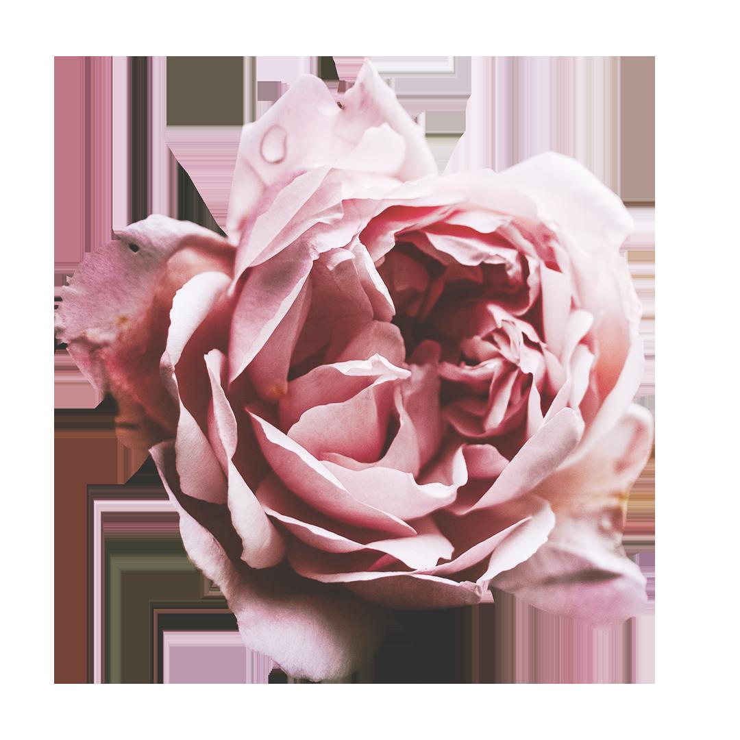 ☆ Ainoa – Paperituotteita, jotka menevät tunteisiin ☆ 1